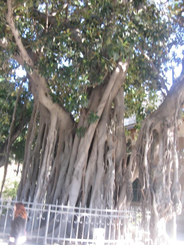 Photos de jardins, parcs, forêts... dans le monde Img_0310