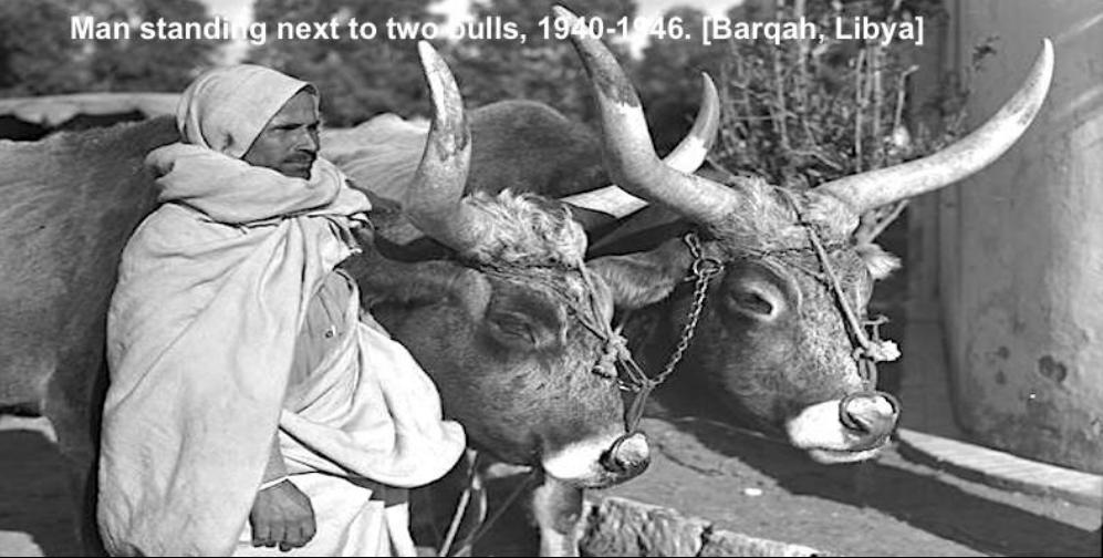 صور من التراث الليبي Aoa_111