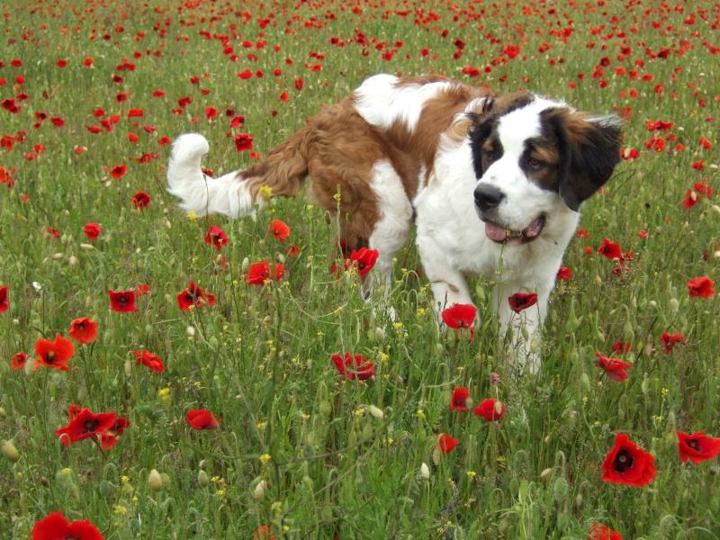 Puppies & poppies Dscf0712
