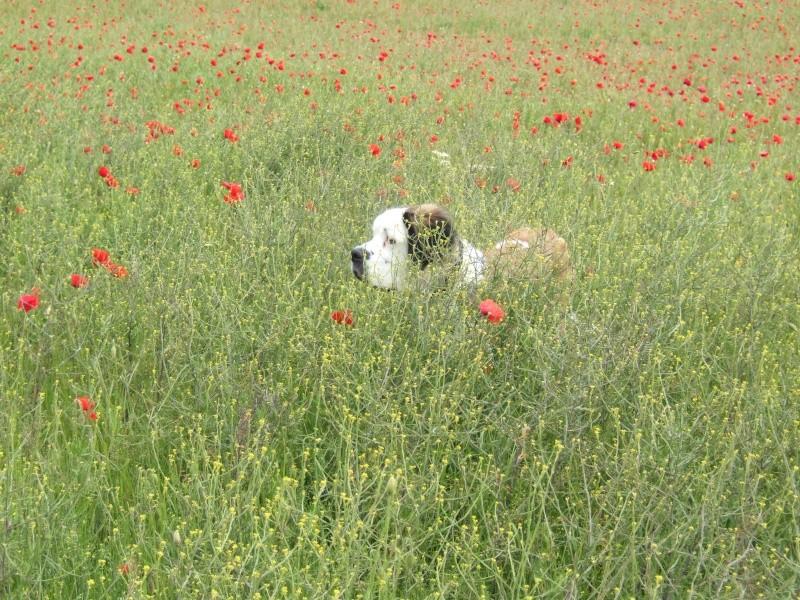 Puppies & poppies Dscf0816