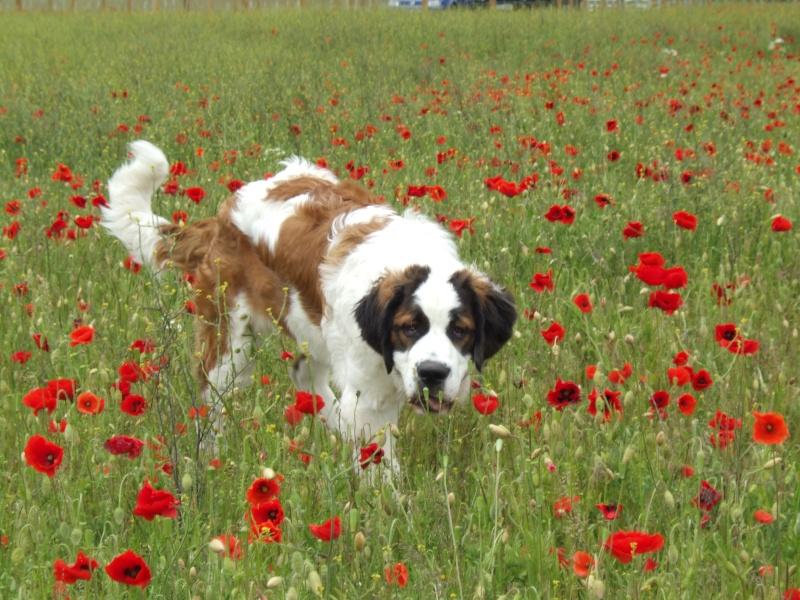 Puppies & poppies Dscf0817