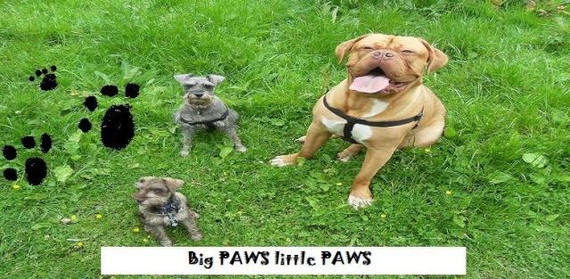 Free forum : Big Paws Little Paws Bigpaw11