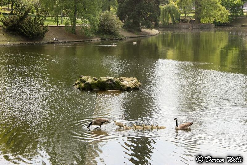 2eme Partie Parc d'avroy (liege) Canon_20