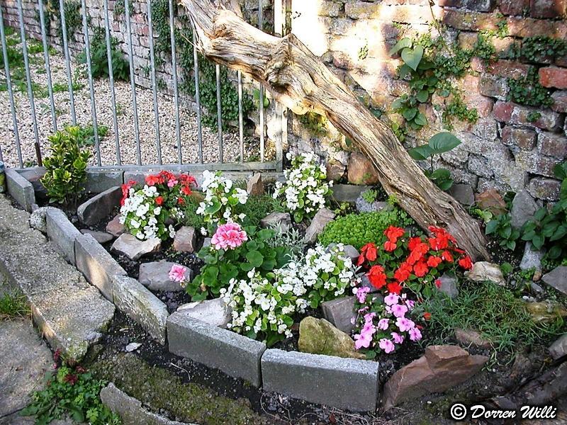 Quelques fleurs de mon jardin Grisse10