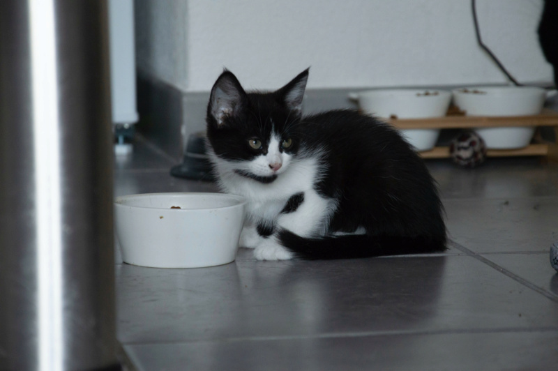 degza - DEGZA - CABRIOLE + 2 chatons Lespinet (BLACK PEARL 2 adopté) Img_0612