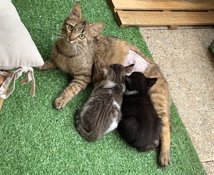 3 chatons Cassolette Img_7721