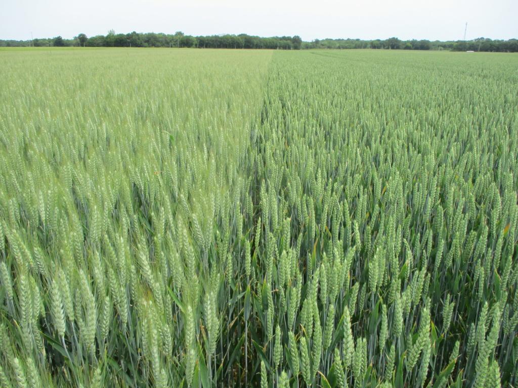 variété blé tendre 2019 - Page 2 Img_0128