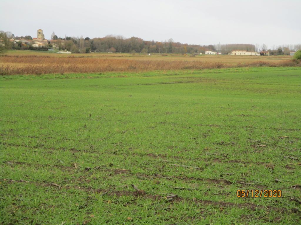 suivi blé 2021 Img_0747