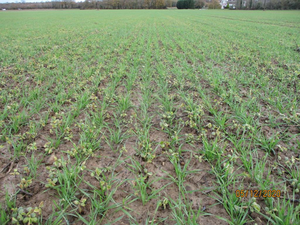 suivi blé 2021 Img_0749