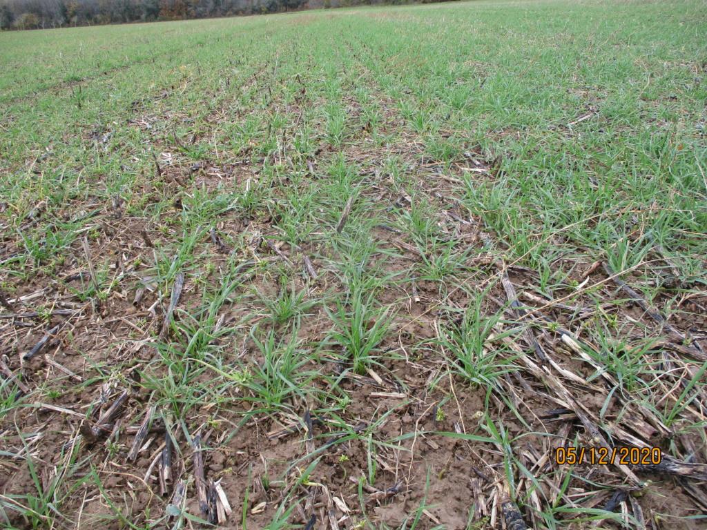 suivi blé 2021 Img_0751