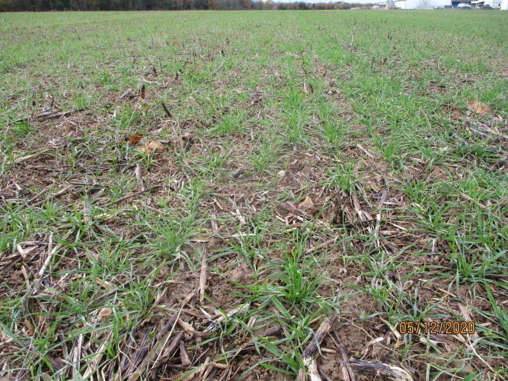 suivi blé 2021 Img_0752