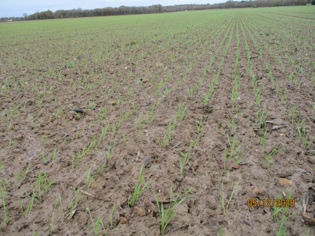 suivi blé 2021 Img_0757