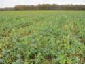 suivi blé 2021 Img_0758