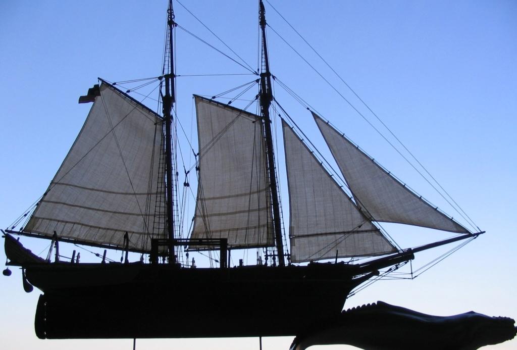 Solido supporto per altrettanto vascello! Balena10