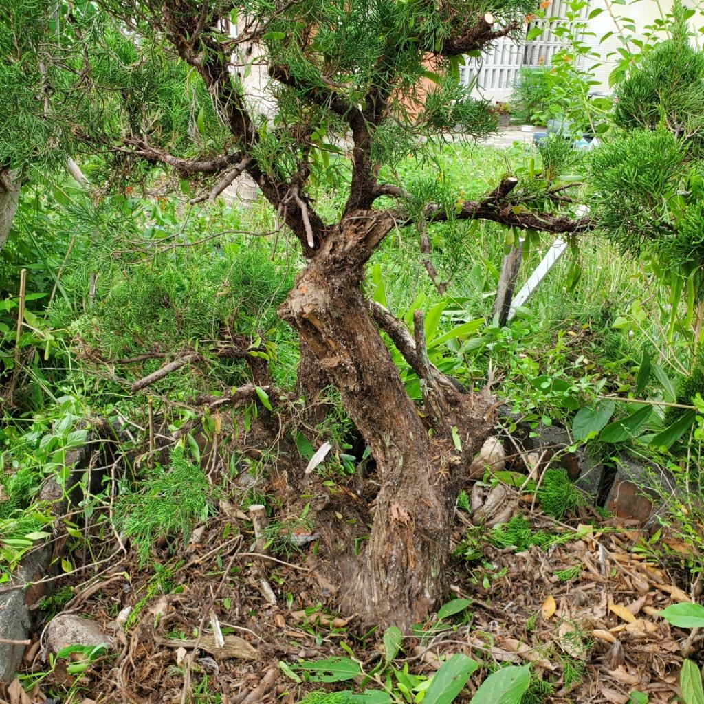 Please help me to design my tree 20201010