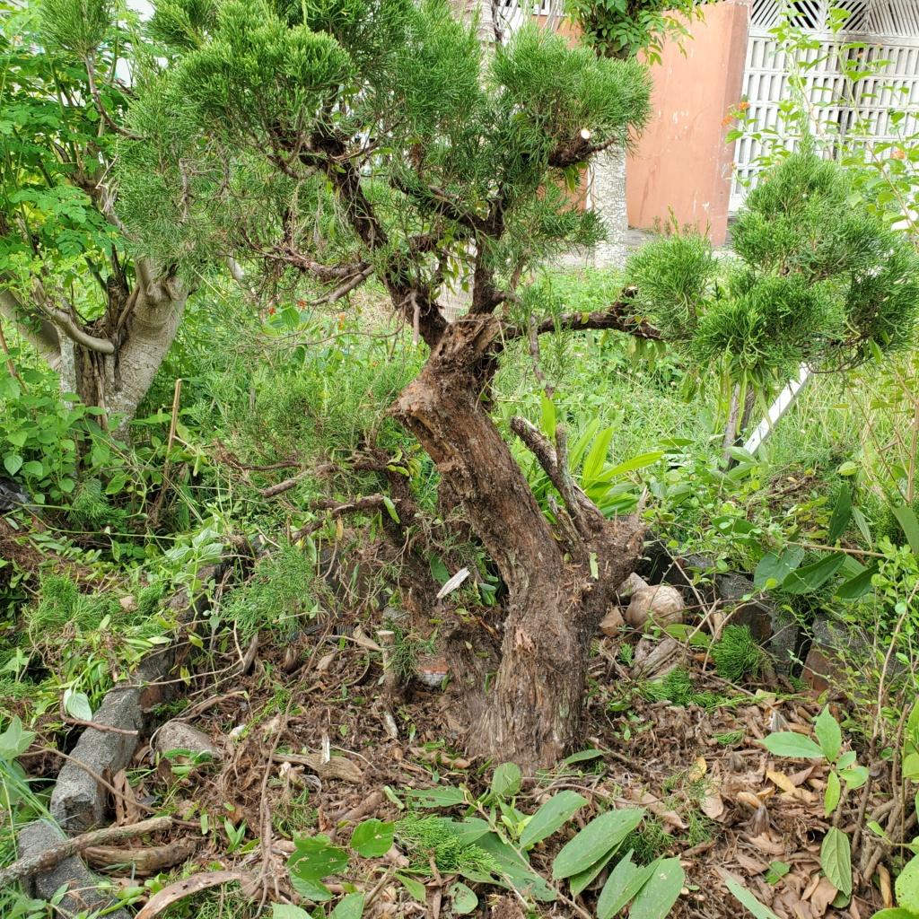 Please help me to design my tree 20201011