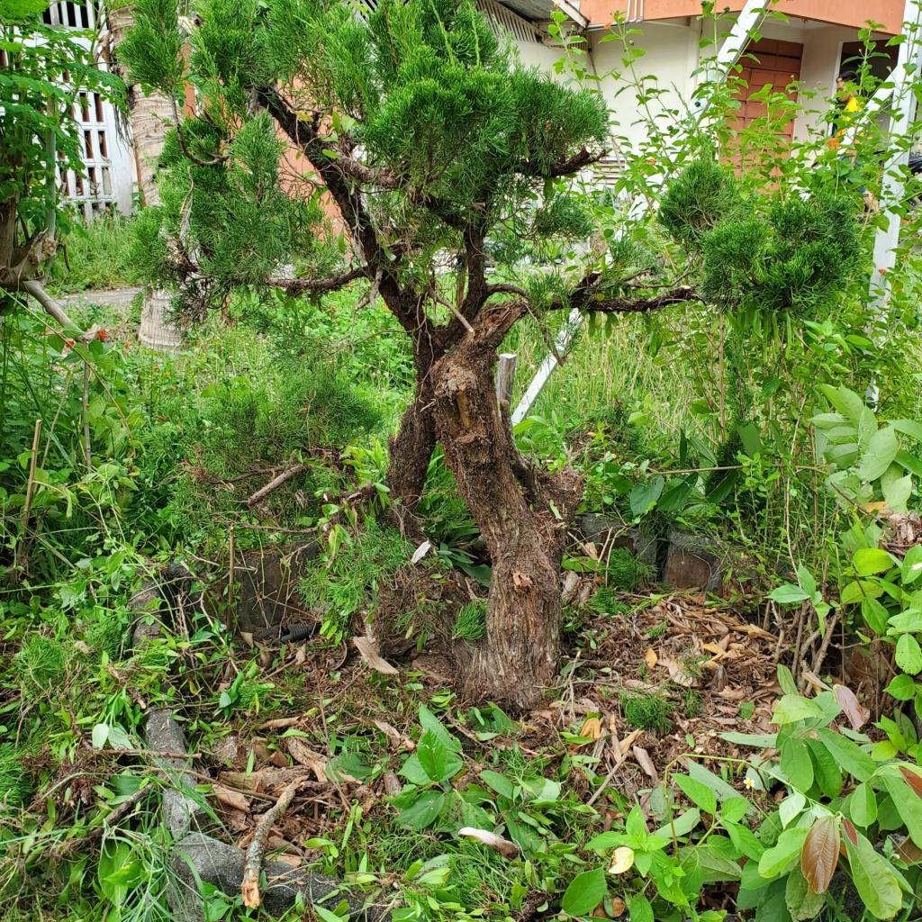 Please help me to design my tree 20201012