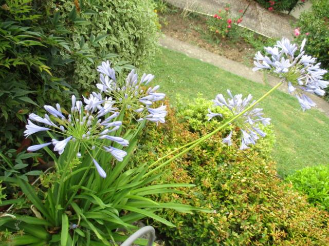 5 juillet : une ou des fleurs Img_2710