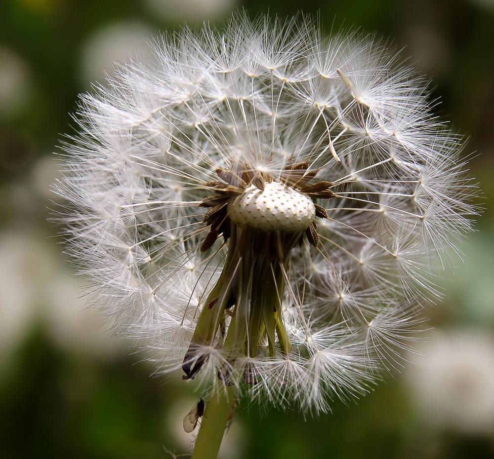 la pelouse.... Phil5911