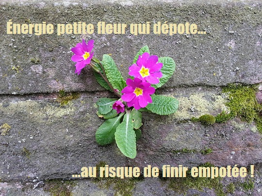 Voilà Ange aile Dame du Balcon - Page 2 3110
