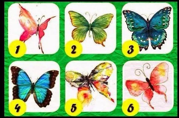 Quel papillon êtes-vous ? Pap12