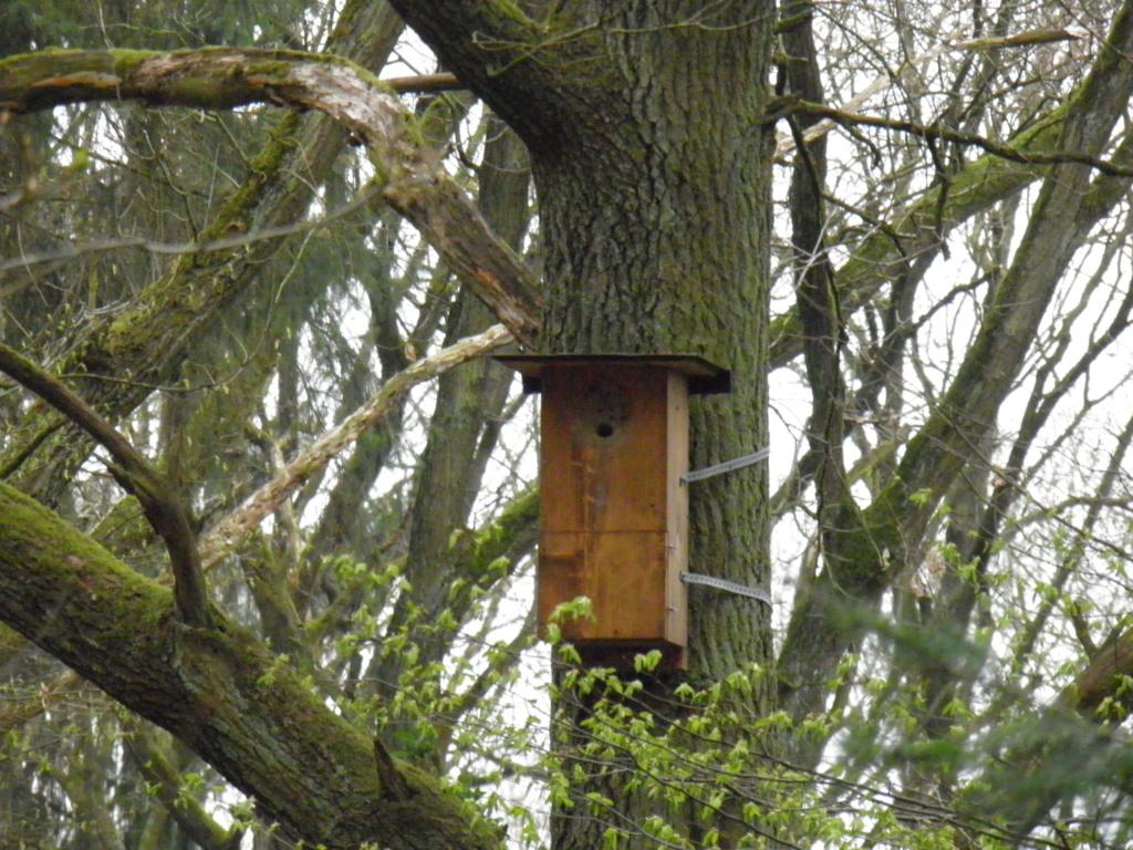 Observation facile des oiseaux Hulott10