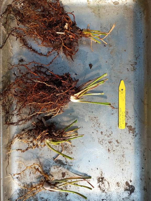 Dionaea et sarracenia a echanger 20210316