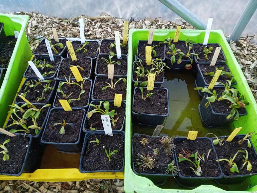 Dionaea et sarracenia a echanger 20210318