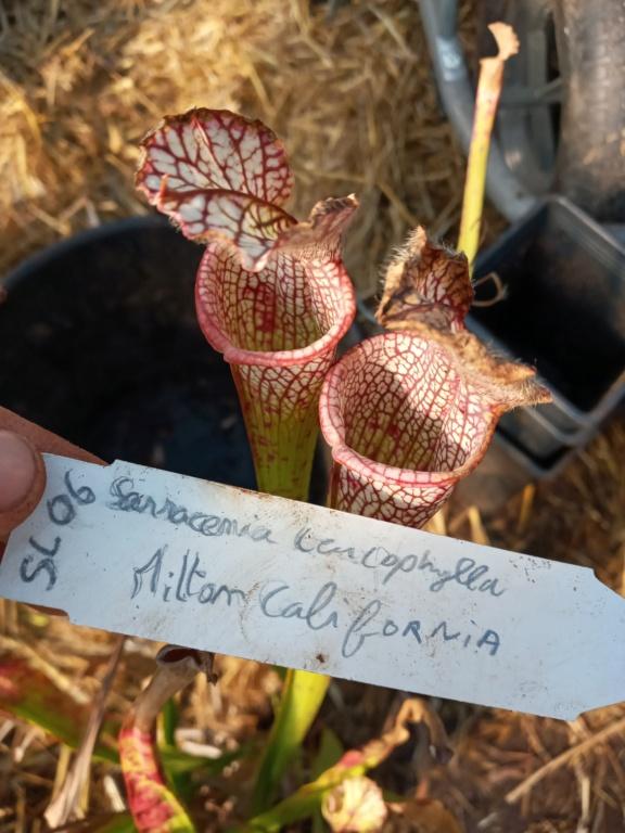 Dionaea et sarracenia a echanger 20210319