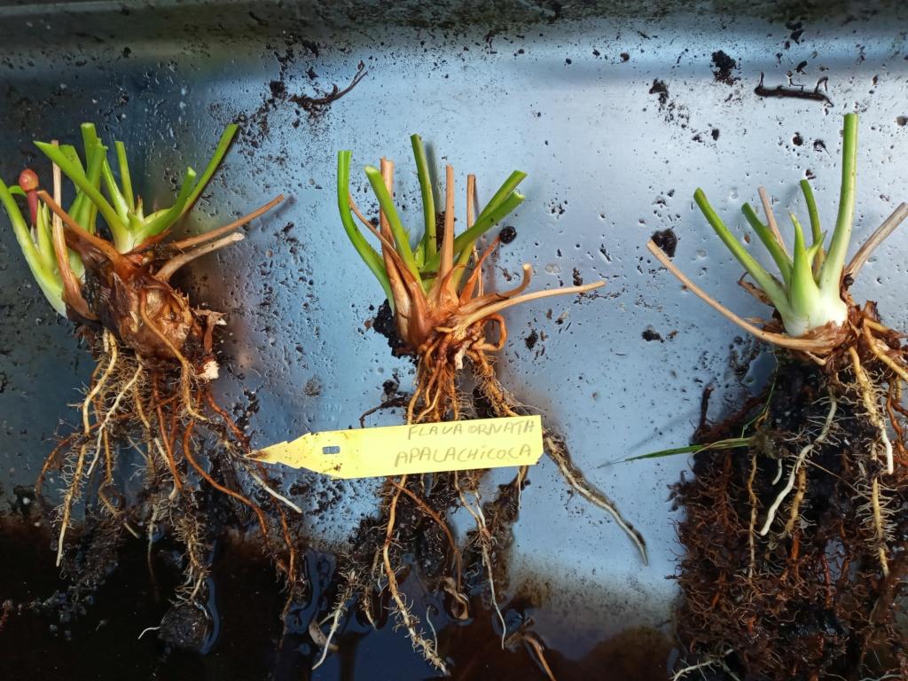 Dionaea et sarracenia a echanger 20210322