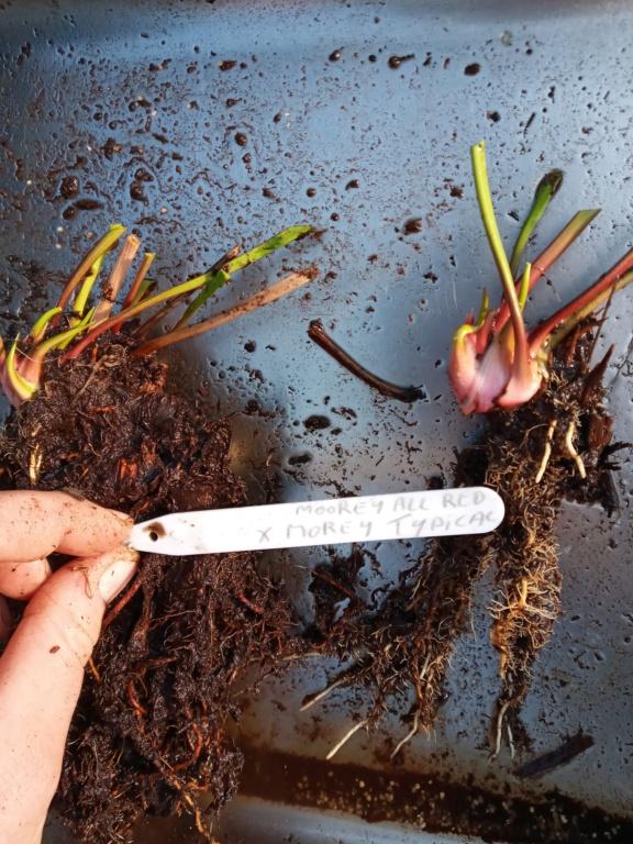 Dionaea et sarracenia a echanger 20210326
