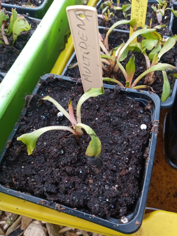 Dionaea et sarracenia a echanger 20210328