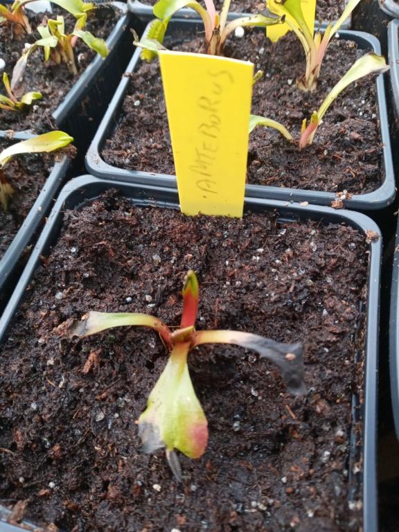 Dionaea et sarracenia a echanger 20210329