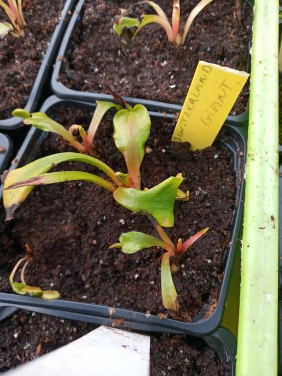 Dionaea et sarracenia a echanger 20210331