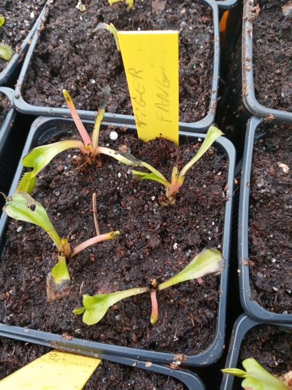 Dionaea et sarracenia a echanger 20210332