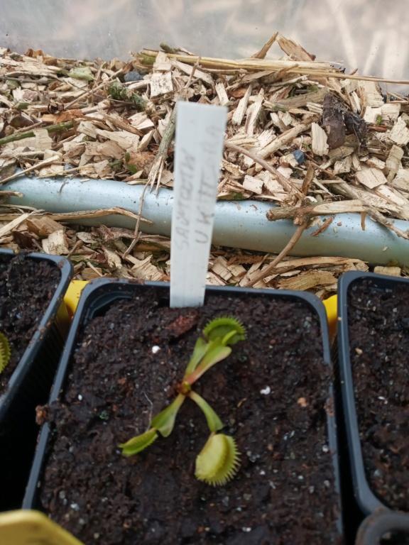 Dionaea et sarracenia a echanger 20210336