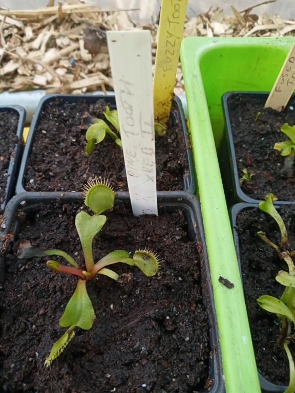Dionaea et sarracenia a echanger 20210337