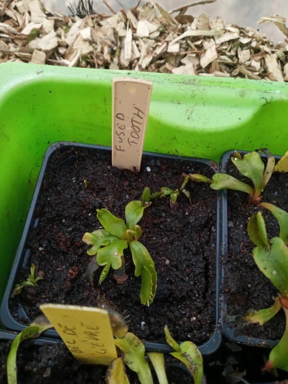 Dionaea et sarracenia a echanger 20210339