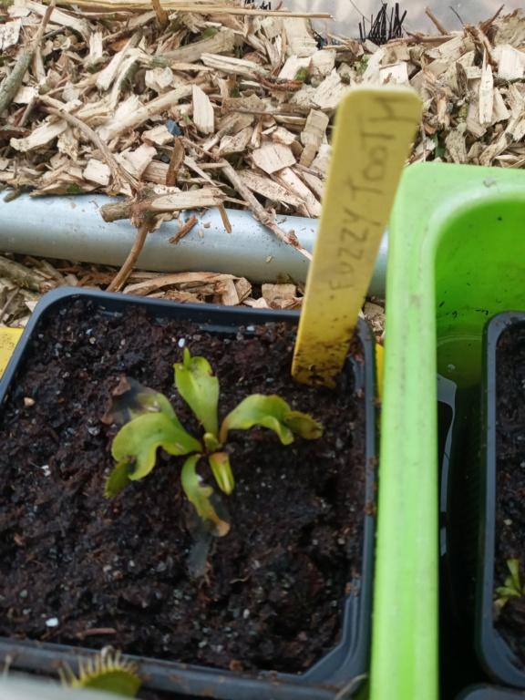 Dionaea et sarracenia a echanger 20210340