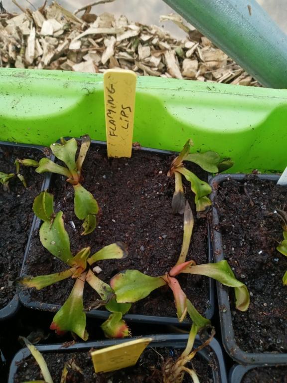 Dionaea et sarracenia a echanger 20210341