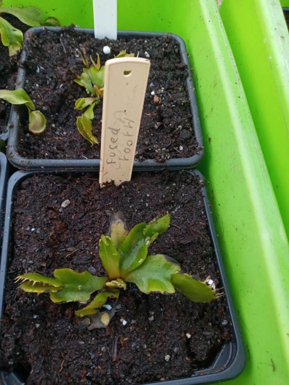 Dionaea et sarracenia a echanger 20210343