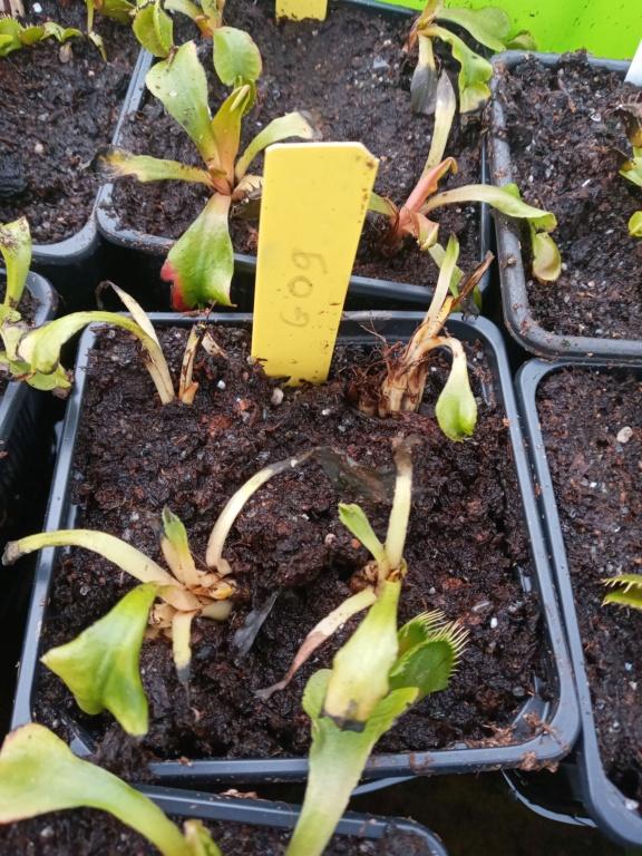 Dionaea et sarracenia a echanger 20210344