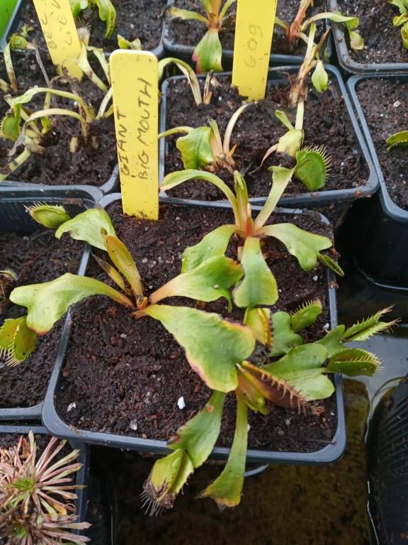 Dionaea et sarracenia a echanger 20210346