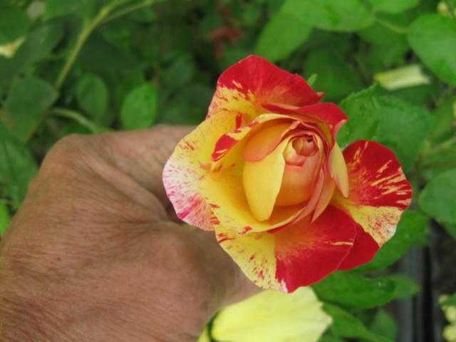visite de mets  fleurs  Boutur10