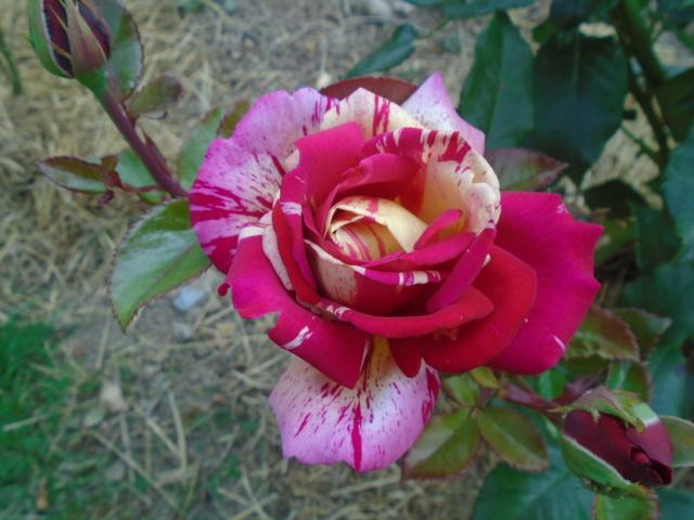 visite de mets  fleurs  Briszo10