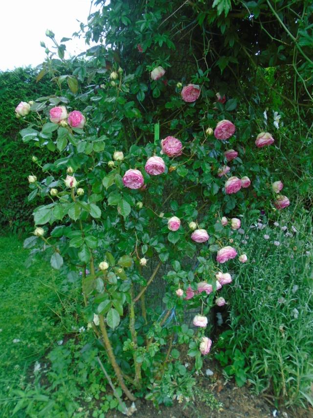 visite de mets  fleurs  Chouet10