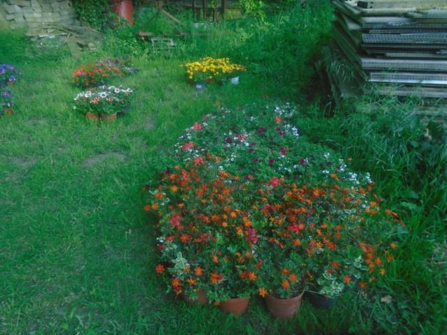 fleurs de fouqueville Passag16