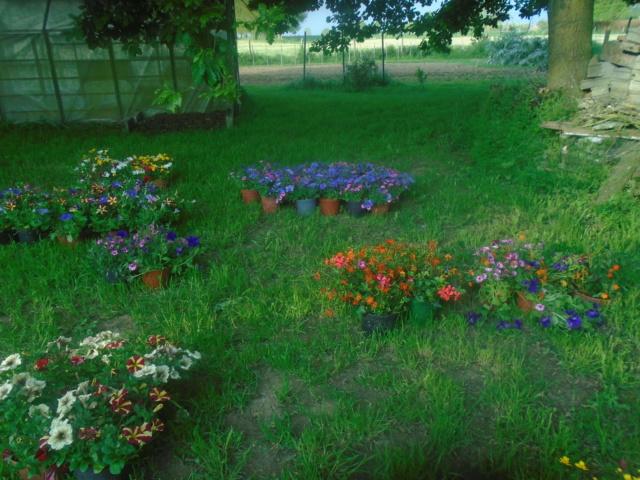 fleurs de fouqueville Passag17