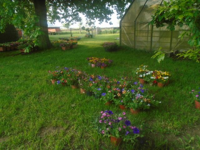 fleurs de fouqueville Passag18