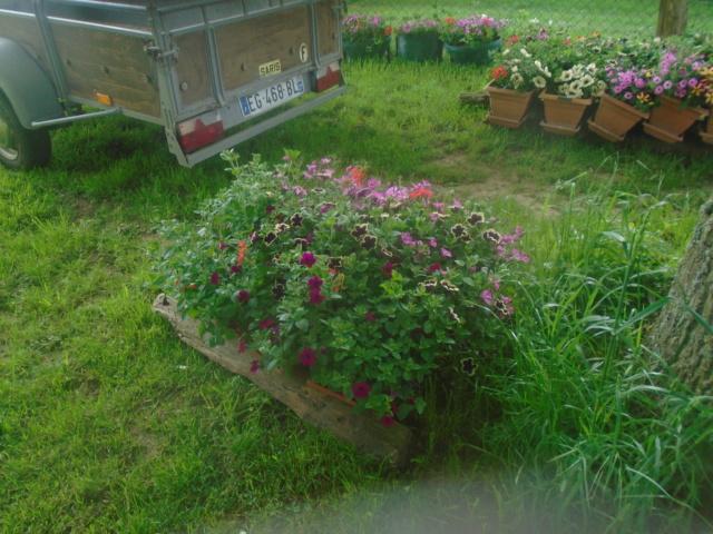 fleurs de fouqueville Passag20